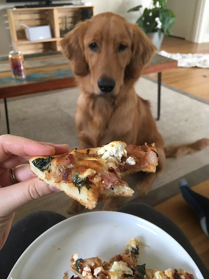 golden retriever staring at piece of pizza